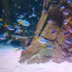 Barrera de Coral